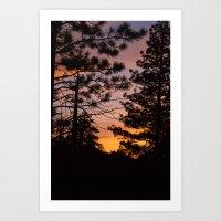 Sunset Between The Trees pt. 2 Art Print