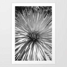 Yucca Plant Art Print