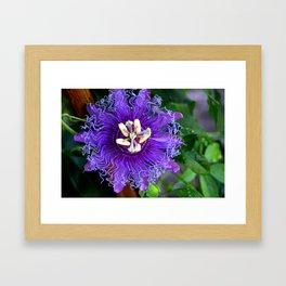 Pasion Fruit -Purple Flower Framed Art Print