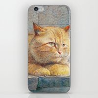 ginger iPhone & iPod Skins featuring Ginger by irshi