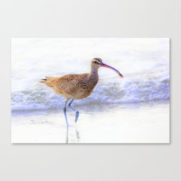 Shore Bird - Whimbrel with Sand Crab by Reay of Light Canvas Print