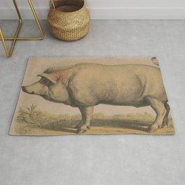Vintage Illustration of a Domesticated Pig (1874) Rug