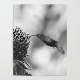 Colibri Poster