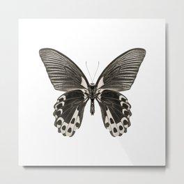 Mono Scarlet Mormon Butterfly Metal Print