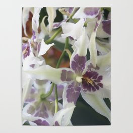 Longwood Gardens Orchid Extravaganza 75 Poster