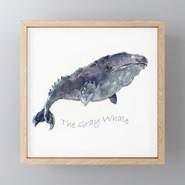 Gray Whale Framed Mini Art Print