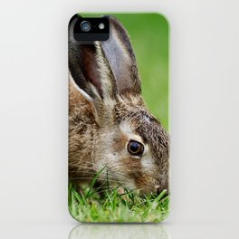 Lepus europaeus young hare iPhone Case