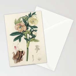 Hellebore (Helleborus orientalis) illustration from Medical Botany (1836) by John Stephenson and Jam Stationery Cards