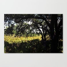 Palmettos in the shade  Canvas Print