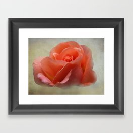 Romantic Peachy Rose Floral Framed Art Print