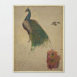 Peacock Sketch Canvas Print