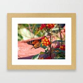 Monarch Beauty Framed Art Print