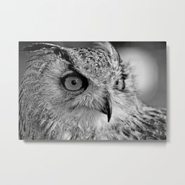 Bengal Owl black and White Metal Print