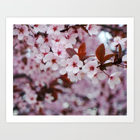 cherry plum candy Art Print