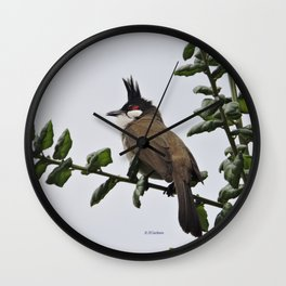 Red-Whiskered Bulbul Wall Clock