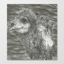 Bactrian Camel Canvas Print