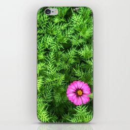 Top view of Yellow cosmos or Sulfur cosmos bush with a blooming pink Zinnia flower. iPhone Skin