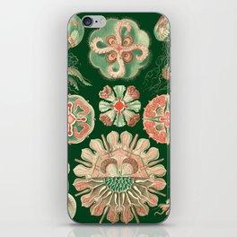 Ernst Haeckel Discomedusae Jellyfish iPhone Skin