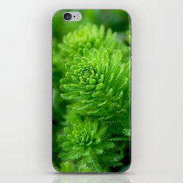 Beautiful green water plant with thin leaves iPhone Skin