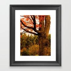 Autumn Lights Framed Art Print