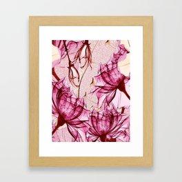 Blush rose red blossom Framed Art Print