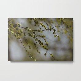 Springtime Green Leaves Metal Print