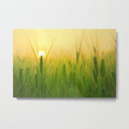 Barley Field Sunrise Metal Print