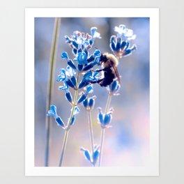 Lavender Bee Art Print