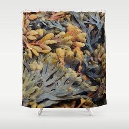 Salty Seaweed Shower Curtain