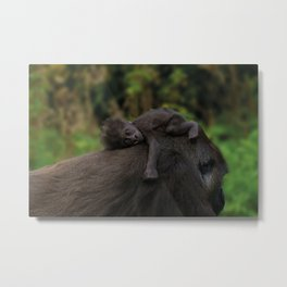 Baby Gorilla Holding On To Her Mother Metal Print