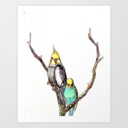 Budgie and Tiel Art Print