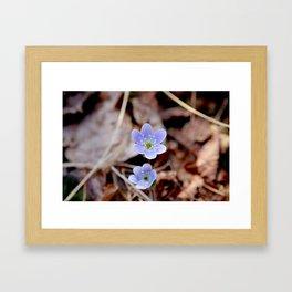 Smallest Blossoms  Framed Art Print