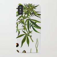 cannabis iPhone & iPod Cases featuring Cannabis Sativa - Koehler (1887) by Ouijawedge