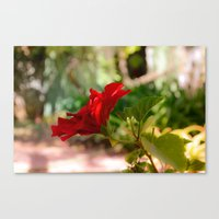 hibiscus Canvas Prints featuring Hibiscus by Sébastien BOUVIER