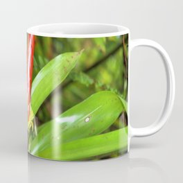 The Bromeliad (the air) plant in flower - El Yunque rainforest PR Coffee Mug