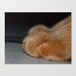 Take a Paws Canvas Print