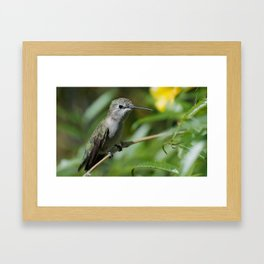 Hummingbird on a branch Framed Art Print