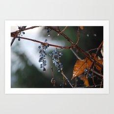 Grapes in a Morning Rain Art Print