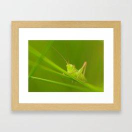 Denizen of a green world Framed Art Print