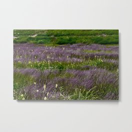 Fields of Grass Metal Print