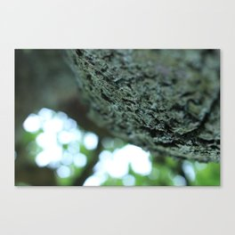 Bokeh Tree Canvas Print