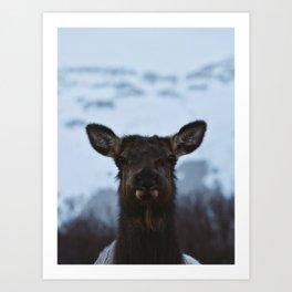 Wild Alaska Art Print