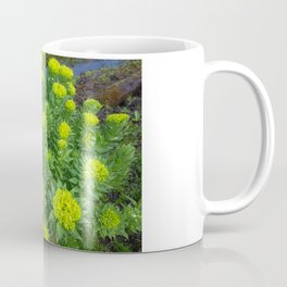 Rhodiola rosea blooms Coffee Mug