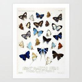 Vintage Butterfly Illustration Art Print