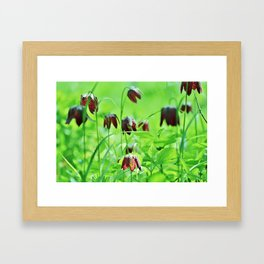 Chequered lily Fritillaria Meleagris Framed Art Print