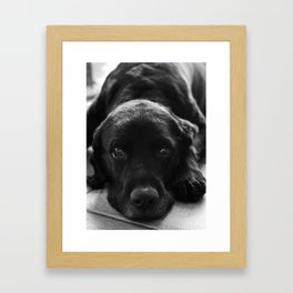 Dog in Black and White Framed Art Print