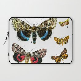 Butterfies plate butterfly print from a vintage insect late 19th century book antique oddities Laptop Sleeve