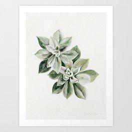 Sedum Succulents Art Print