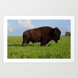 Bison on the praire Art Print