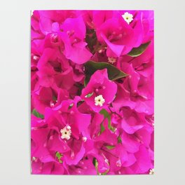 Pink Flower Bloom Poster